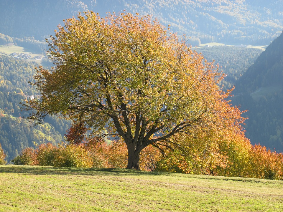 weekend alto adige foliage
